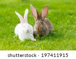Stock photo white and brown rabbits in green grass 197411915