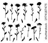 vector silhouettes of garden... | Shutterstock .eps vector #1974187475