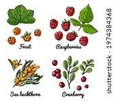 vector food icons of berries.... | Shutterstock .eps vector #1974384368