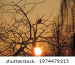 The Silhouette Of A Tree And A...