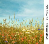 Wild Flowers And Wheat Field...