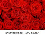 Stock photo big bunch of red roses 19753264