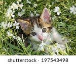 Stock photo cute kitten in a flower bed 197543498
