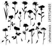 vector silhouettes of garden... | Shutterstock .eps vector #1975714835