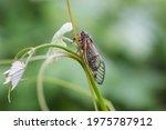 Brood X Cicadas Hatch On The...