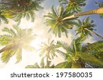 coconut palm trees perspective... | Shutterstock . vector #197580035