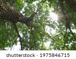 Sunburst Shining Through The...