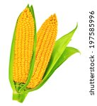 corn isolated  | Shutterstock . vector #197585996