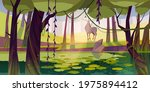 Deer In Forest With Swamp....
