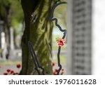 Remembrance Day World War 2...