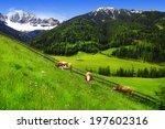 Scenery Of Dolomites   Green...
