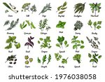 vector food icons of herbs and... | Shutterstock .eps vector #1976038058