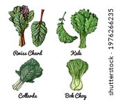 vector food icons of vegetables.... | Shutterstock .eps vector #1976266235