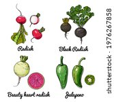 vector food icons of vegetables.... | Shutterstock .eps vector #1976267858
