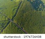 Eucalyptus Plantation In Brazil....