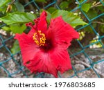 Small photo of Springtime Backyard Flora on Semitropical Island