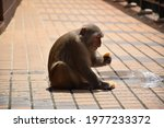 Monkey Eating A Donut On A...