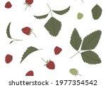Raspberry Vector Seamless...
