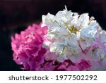 Bouquet Of Beautiful Pink And...