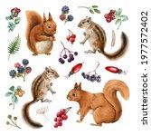 Squirrel  Chipmunk Wildlife...
