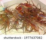 Freshly Caught Lobsters In Los...