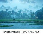Small photo of Monsoon rainfall hits Kerala, Beutiful nature photography, Rainfall, Monsoon season