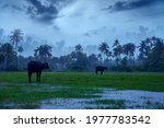 Small photo of Monsoon rainfall hits Kerala, Beautiful nature photography, Rainfall, Monsoon season