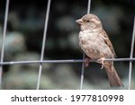 The Bird Poses On The Fence