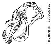 plumeria flower design.... | Shutterstock .eps vector #1978031582