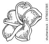plumeria flower design.... | Shutterstock .eps vector #1978031585