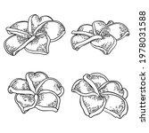 spa salon plumeria flower line... | Shutterstock .eps vector #1978031588