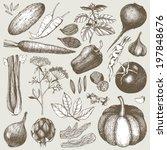 vector collection of ink hand...   Shutterstock .eps vector #197848676