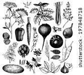 vector collection of black nk... | Shutterstock .eps vector #197848718