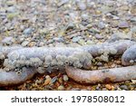 An Old Rusty Anchor Chain...