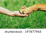 Dog Paw And Human Hand Are...
