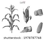 corn collection hand drawn... | Shutterstock .eps vector #1978787768