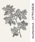 common hawthorn. vector... | Shutterstock .eps vector #1979018828