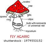 structure of cartoon fruiting... | Shutterstock .eps vector #1979553152