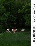 Flamingos In Silesian Park ...