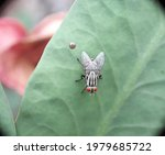 A Flesh Fly In The Wild
