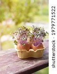 Purple Cabbage In Egg Shells....