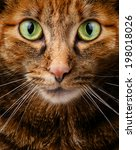 cat staring intensely into the... | Shutterstock . vector #198018026