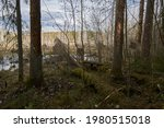 View Of Trees And Swamp In The...