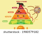 diagram showing energy pyramid... | Shutterstock .eps vector #1980579182