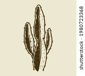 vector hand drawn cactus plants ... | Shutterstock .eps vector #1980723368