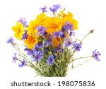 Stock photo beautiful wild flowers isolated on white 198075836