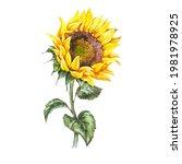 watercolor sunflowers summer...   Shutterstock . vector #1981978925