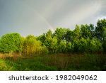 Beautiful Green Sunny Forest In ...