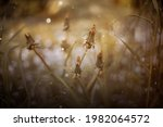 summer meadow with daisies ...   Shutterstock . vector #1982064572