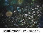 summer meadow with daisies ...   Shutterstock . vector #1982064578